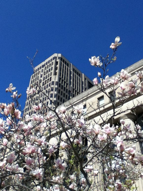:: photo friday :: spring in New Haven
