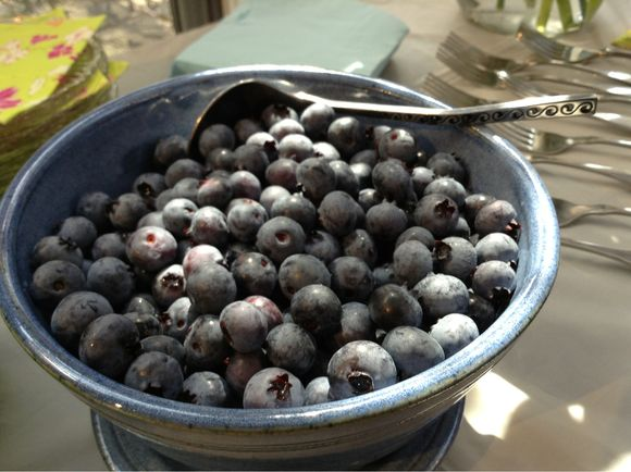 :: photo friday :: blueberry season